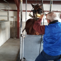 A veterinarian performing a dental procedure on a horse